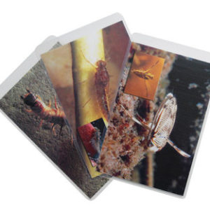 Freshwater Aquatic Macroinvertebrate Insect ID Flashcards