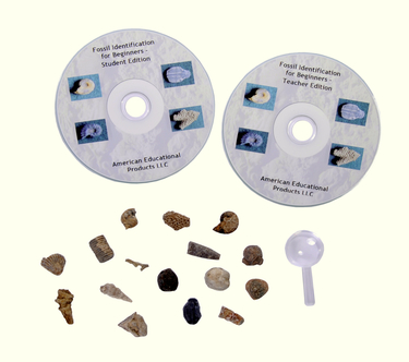 Beginner's Fossil Identification Kit