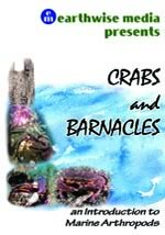 Crabs and Barnacles DVD