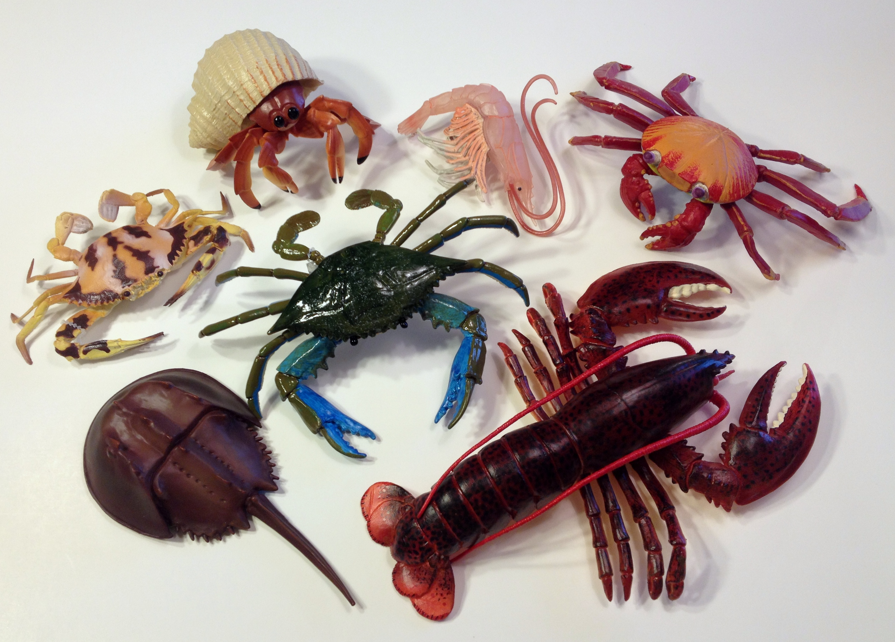 marine arthropods set of 7 what if scientific leave only bubbles