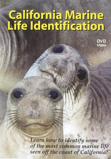 California Marine Life DVD cover