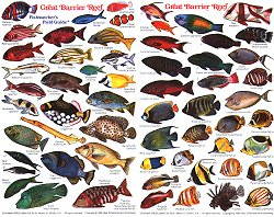 fish of the great barrier reef ID