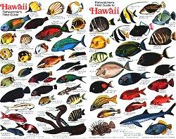 Fish of hawaii full color waterproof identification card for Hawaiian fish identification