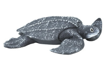 leatherback sea turtle model