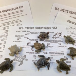 turtle ID activity